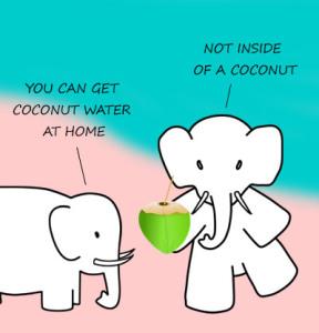 elephant_coconut