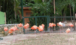 The highlight of the gardens are the delicate flamingos that are trained to do marching drills.