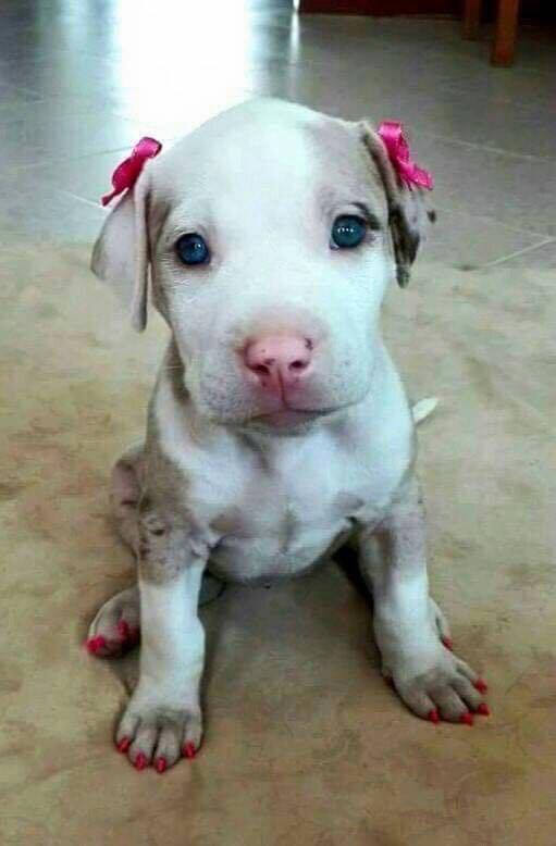%e7%94%a814its-a-dog-not-a-dress-up-doll